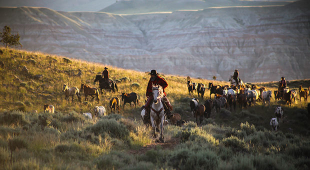 Top 20 Ranches | CM Ranch, Wyoming Dude Ranch - Top 20 Ranches